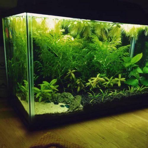 Aquatic Plants for Beginners