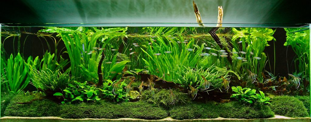Beginner's guide to setting up an aquarium with live plants