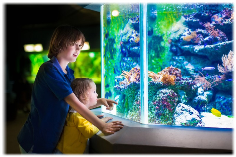 Why aquarium fishes make great pets for kids