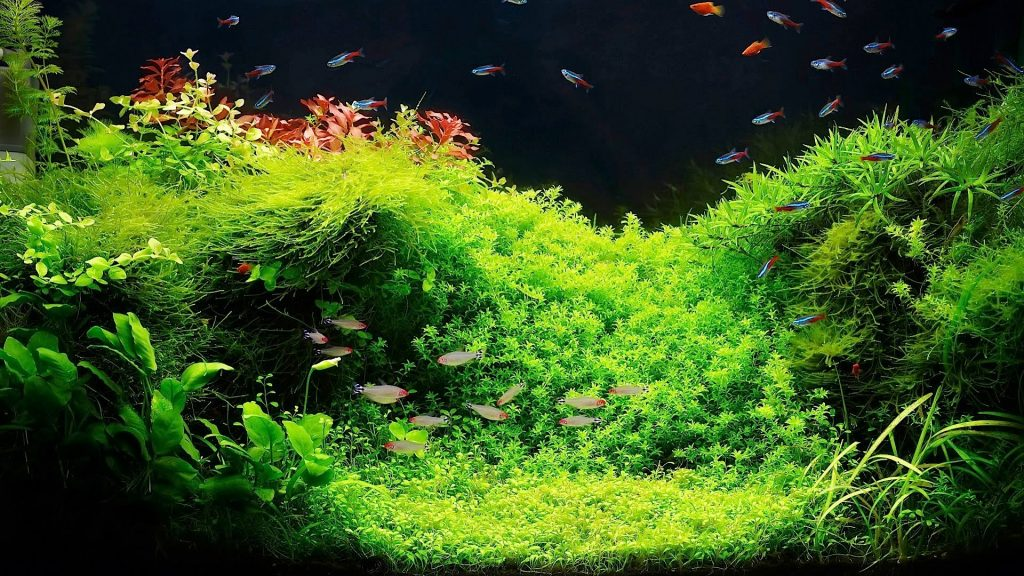 aquatic plants in aquariums