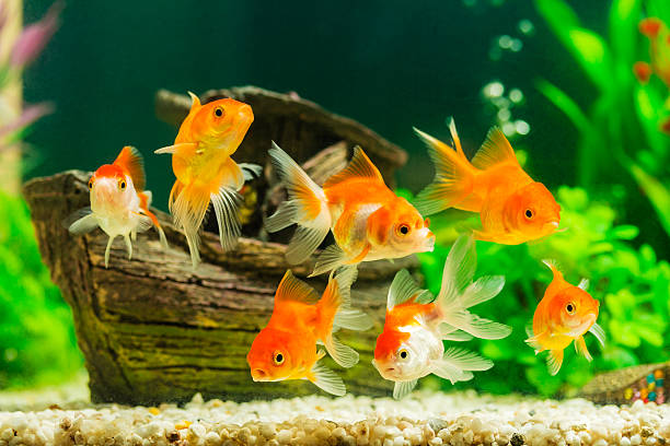 Tips to keep fish happy and healthy inside the Aquarium