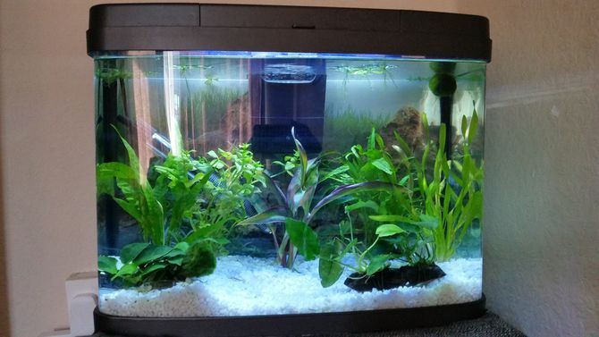 How to change aquarium water perfectly