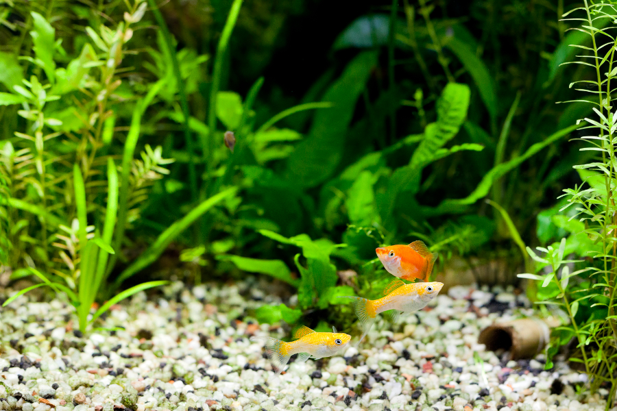 Maintaining the aquariums water quality