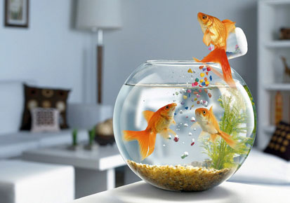 Alternative Fish Food for your Aquarium